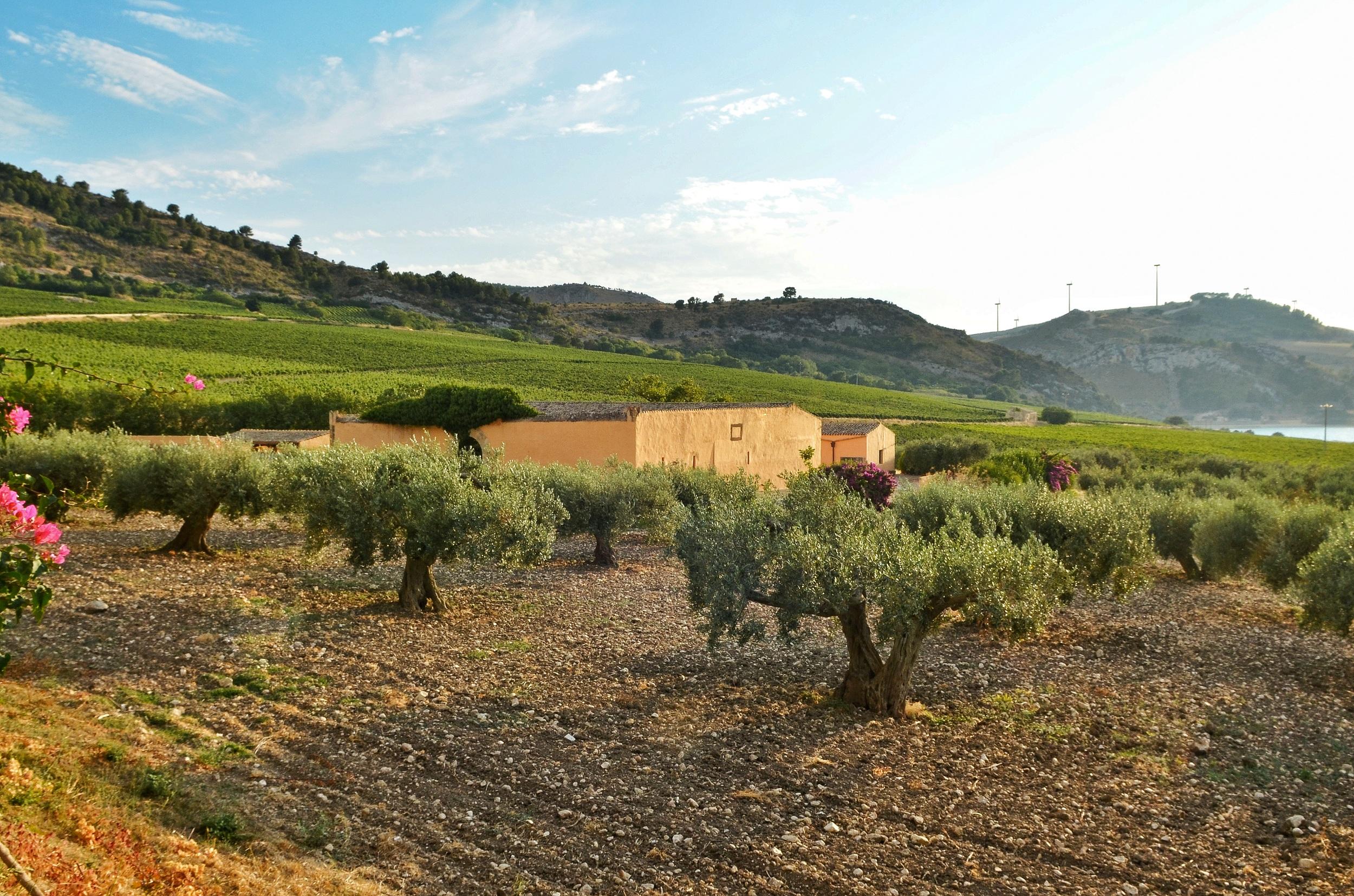 Situata vicino a Sambuca di Sicilia, paese di origine araba sulle sponde del Lago Arancio, la tenuta dell'Ulmo è la prima di Planeta, inaugurata nel 1995.