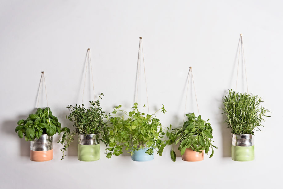 Dalani, Orto aromatico, Cucina, Fai da Te, Casa, Idee