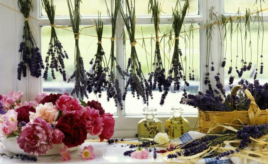 Dalani, Provenza, Casa, Fiori, Ispirazioni, Idee, Cucina, Giardino