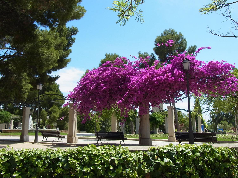 Eventi, 5 eventi imperdibili, Fiori, Giardino, Ispirazione, Trend, Dove fiorisce la Jacaranda