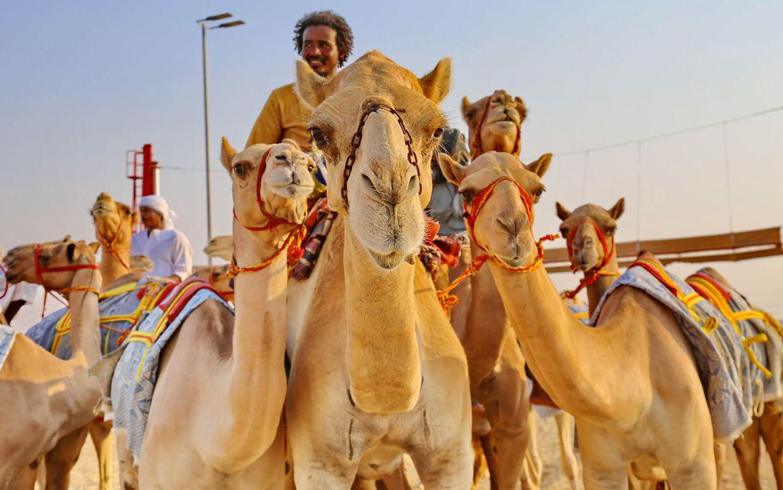 Immagini da Abu Dhabi.