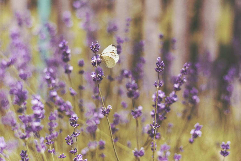 Dalani, Farfalle, Trend, Moda, Casa, Decorazioni, Giardino