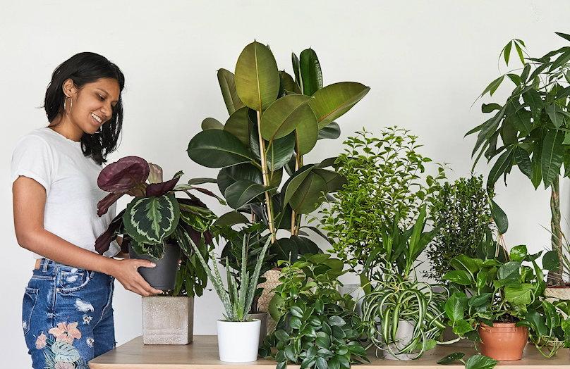 Un giardino in casa #1