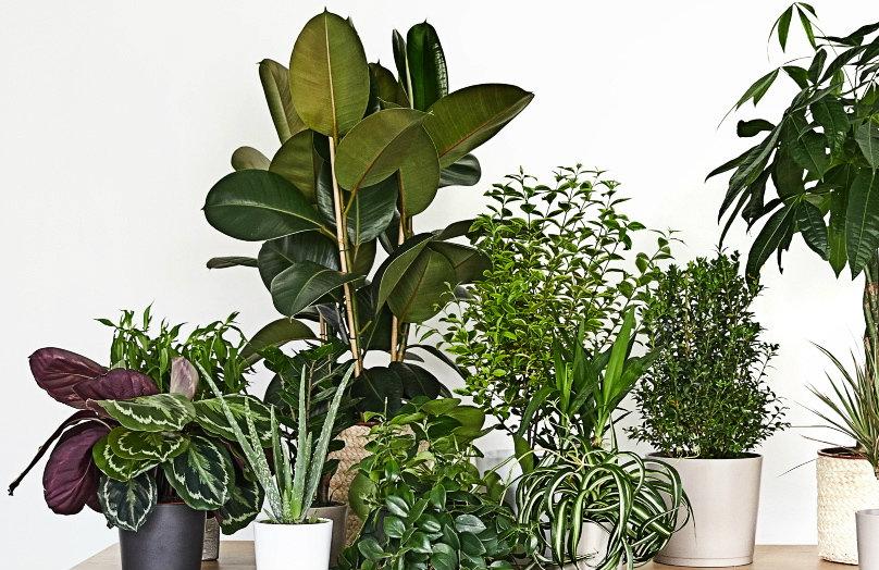 Un giardino in casa #2