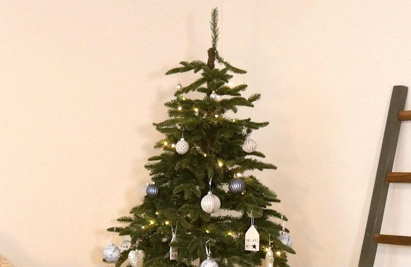 Albero di Natale - Guida pratica