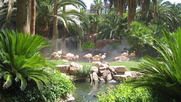 Flamingos_tuin