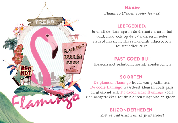 def_magazine_nl-newstrends-flamingo-love-steckbrief-2