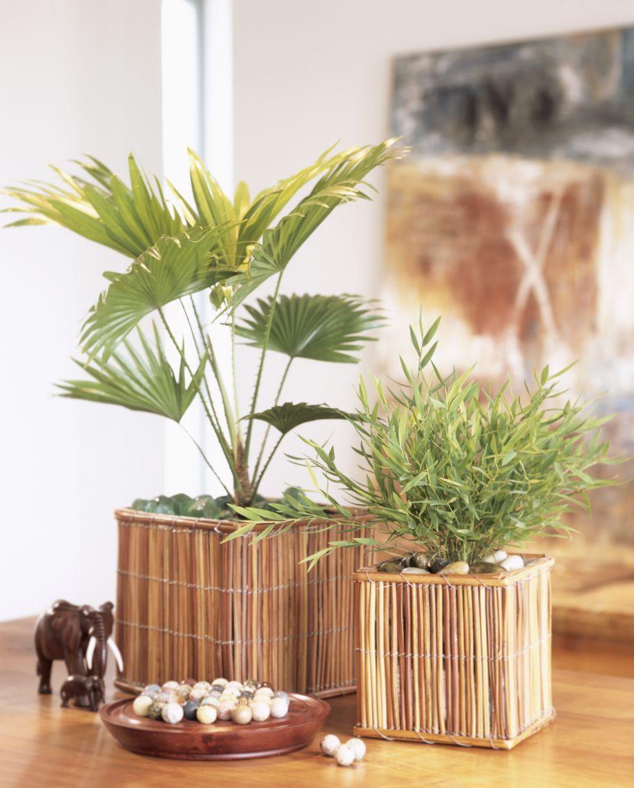 bamboe planten badkamer fuck for