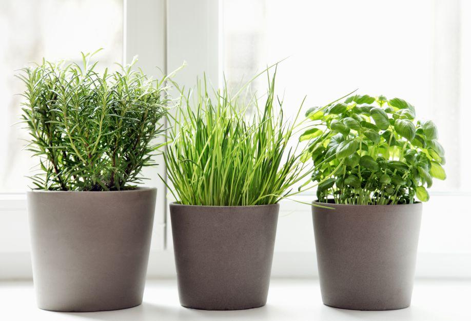 Westwing-planten-kruiden
