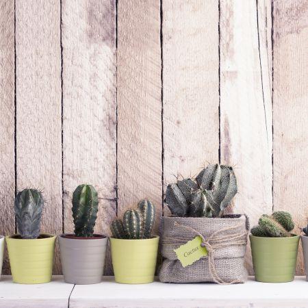 Botanical home: planten in de hoofdrol