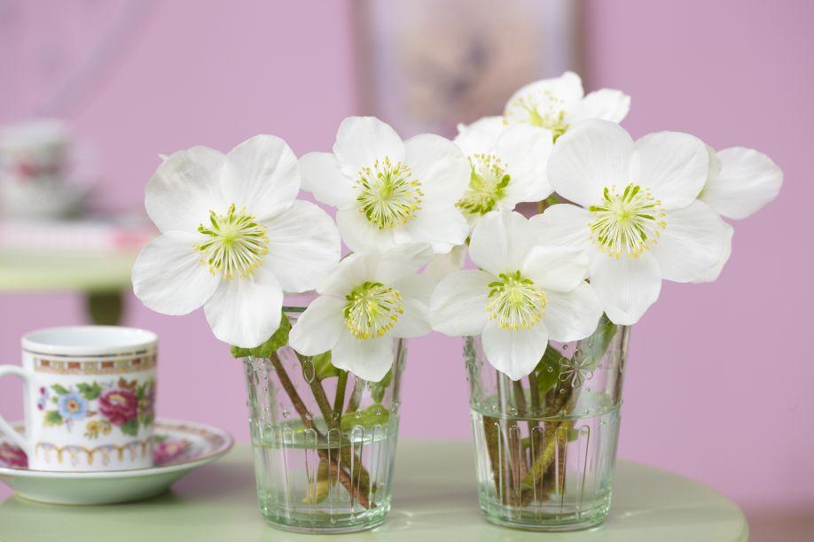 lentebloemen wit in kleine glaasjes