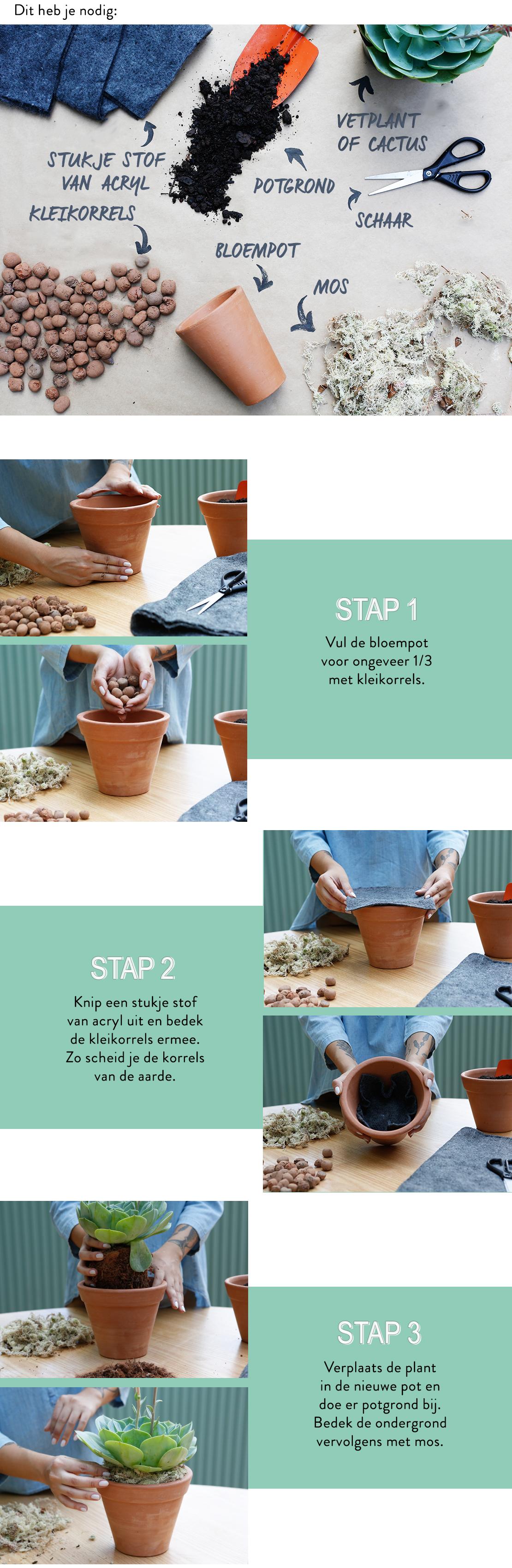 cactus-vetplanten-verpotten-stappenplan