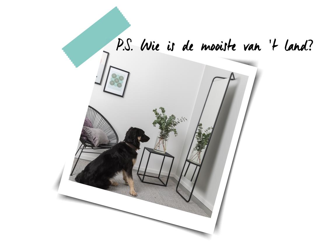 hond-en-spiegels