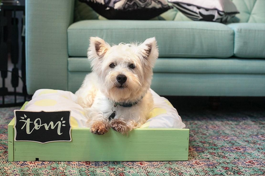hondenbed-met-tom-af