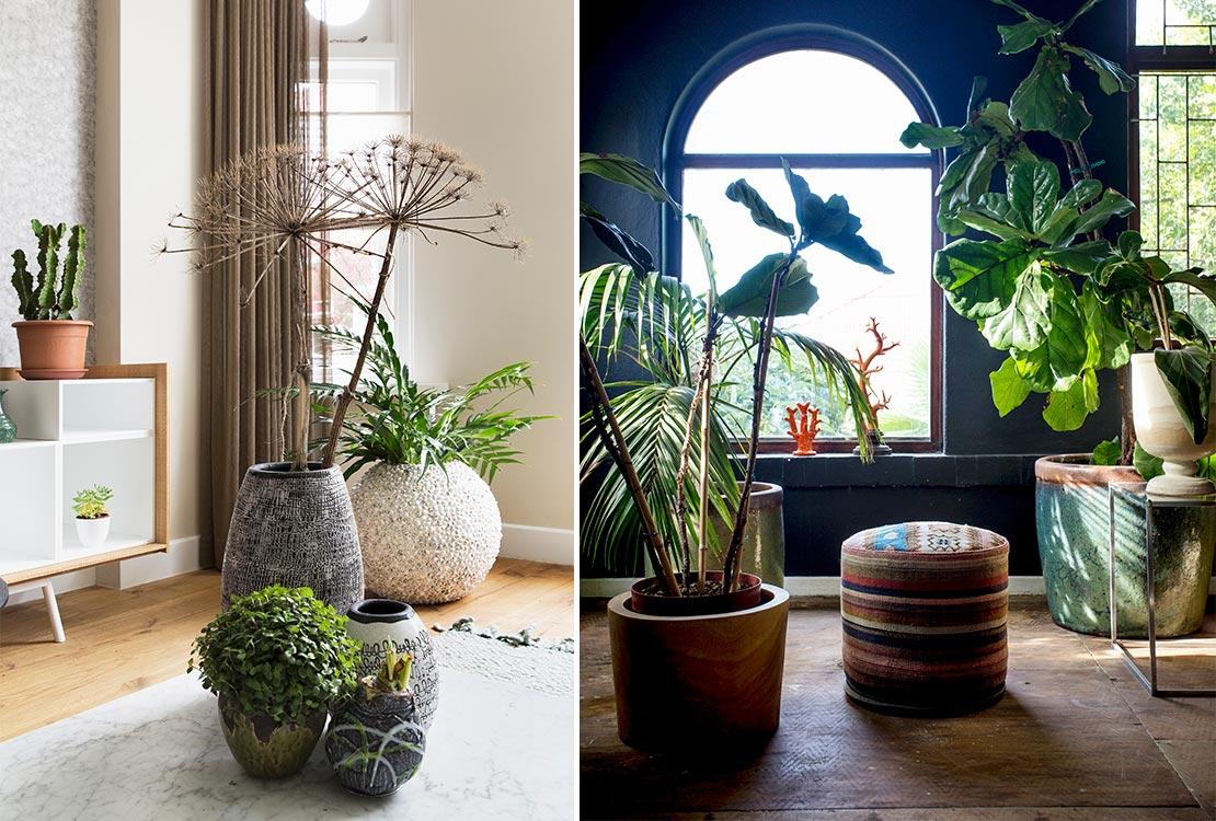 Zo haal jij je eigen sophisticated jungle in huis westwing magazine