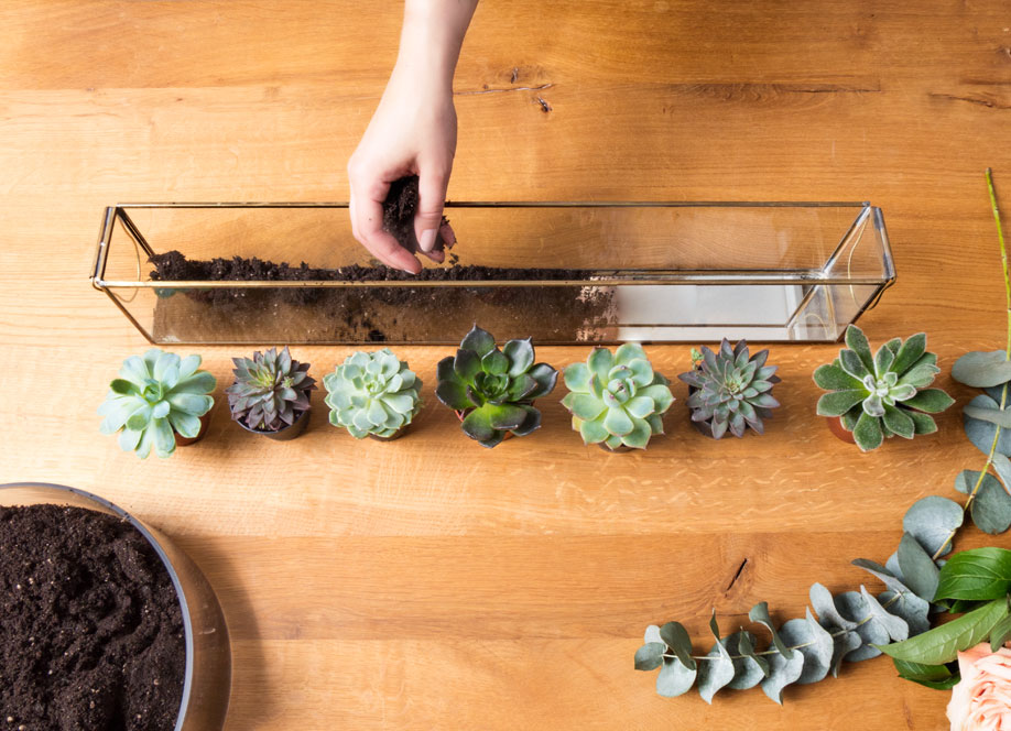 podłużne szklane terrarium