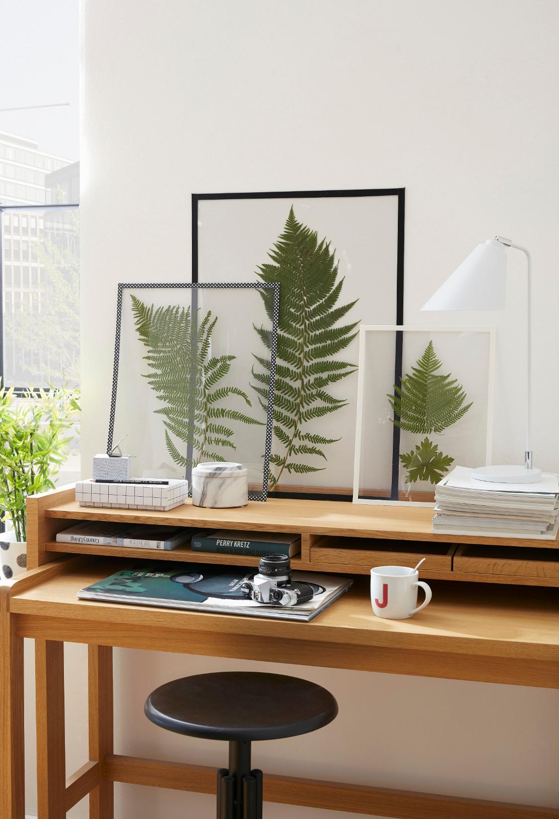 jasne-wnętrza-rośliny