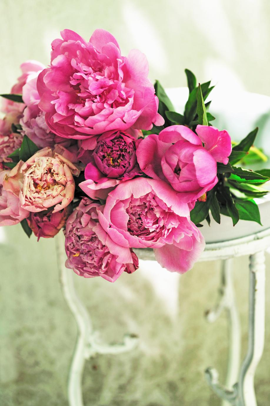 Westwing-kwiaty-peonie