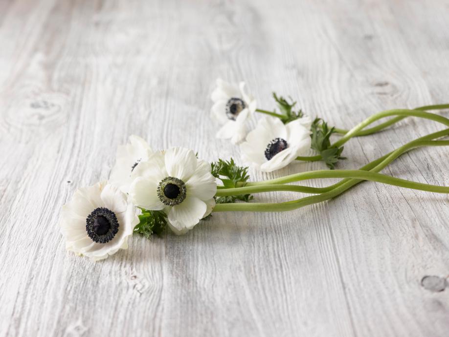 Westwing-kwiaty-zawilce