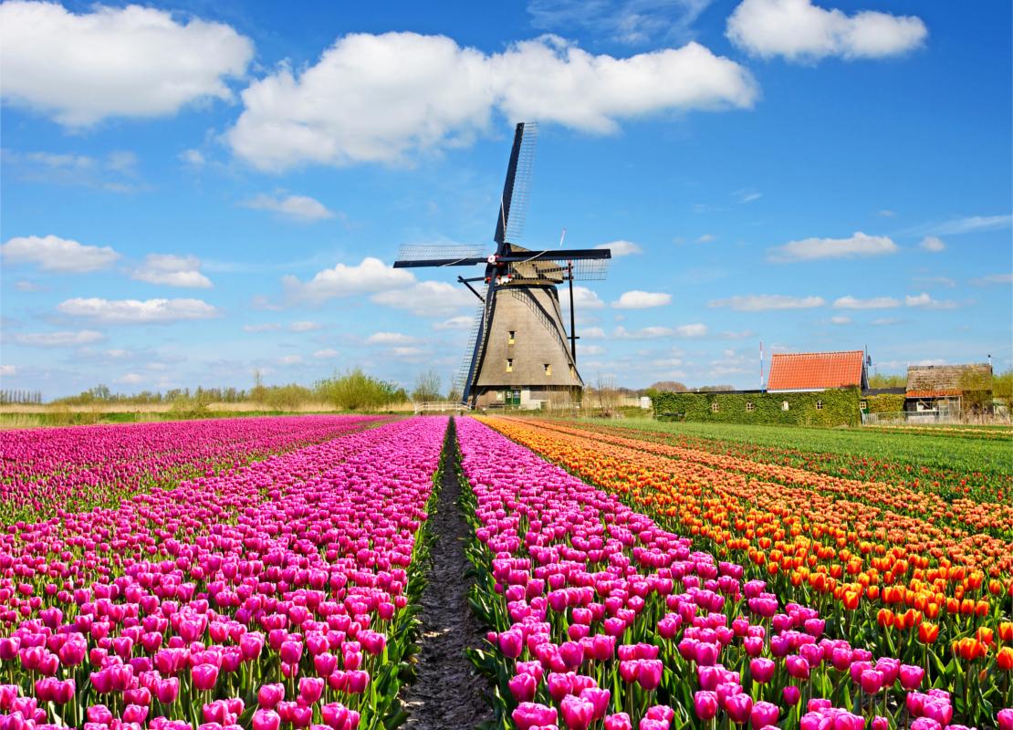 westwing-najpiekniejsze-ogrody-swiata-tulipany