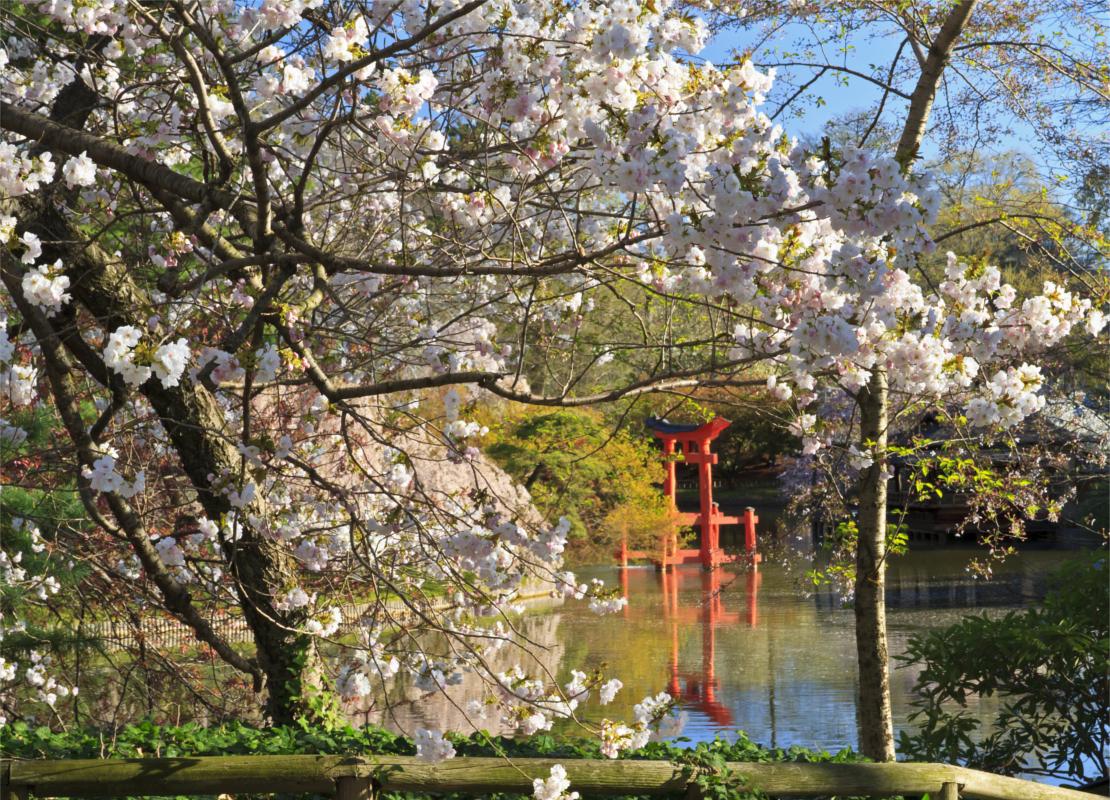 westwing-najpiekniejsze-ogrody-swiata-japonski