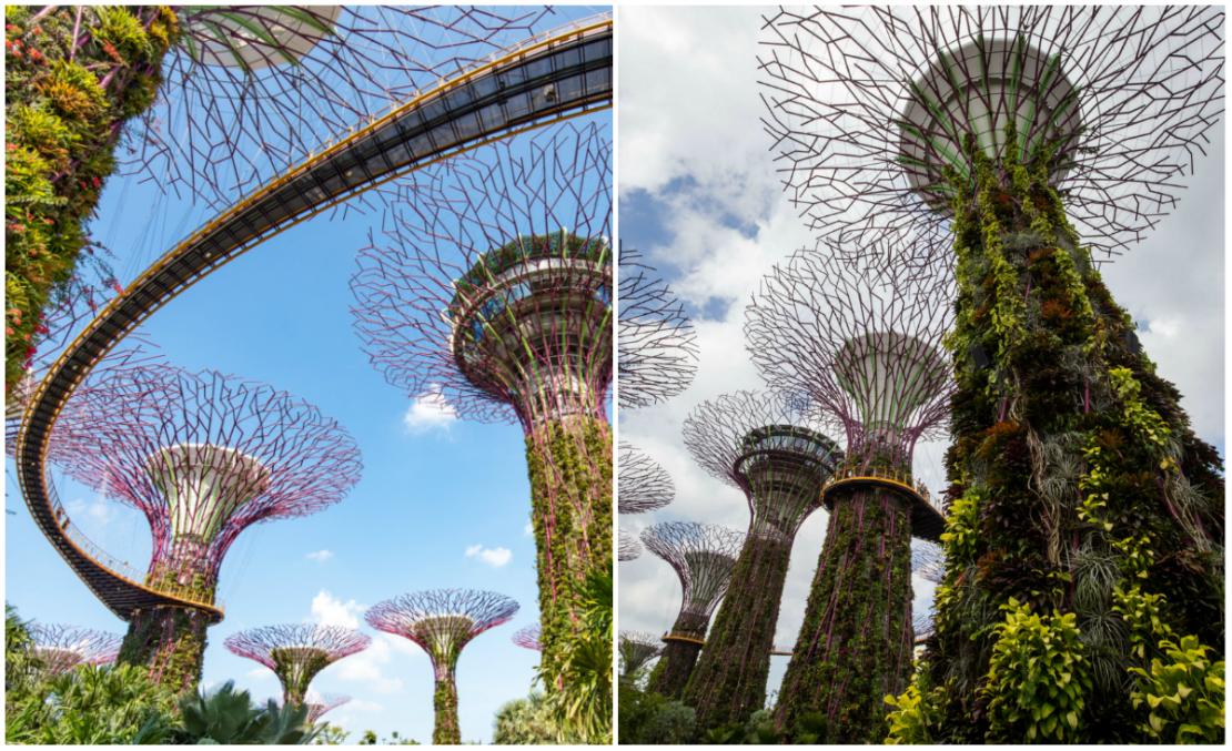 westwing-najpiekniejsze-ogrody-swiata-gigantyczne-drzewa