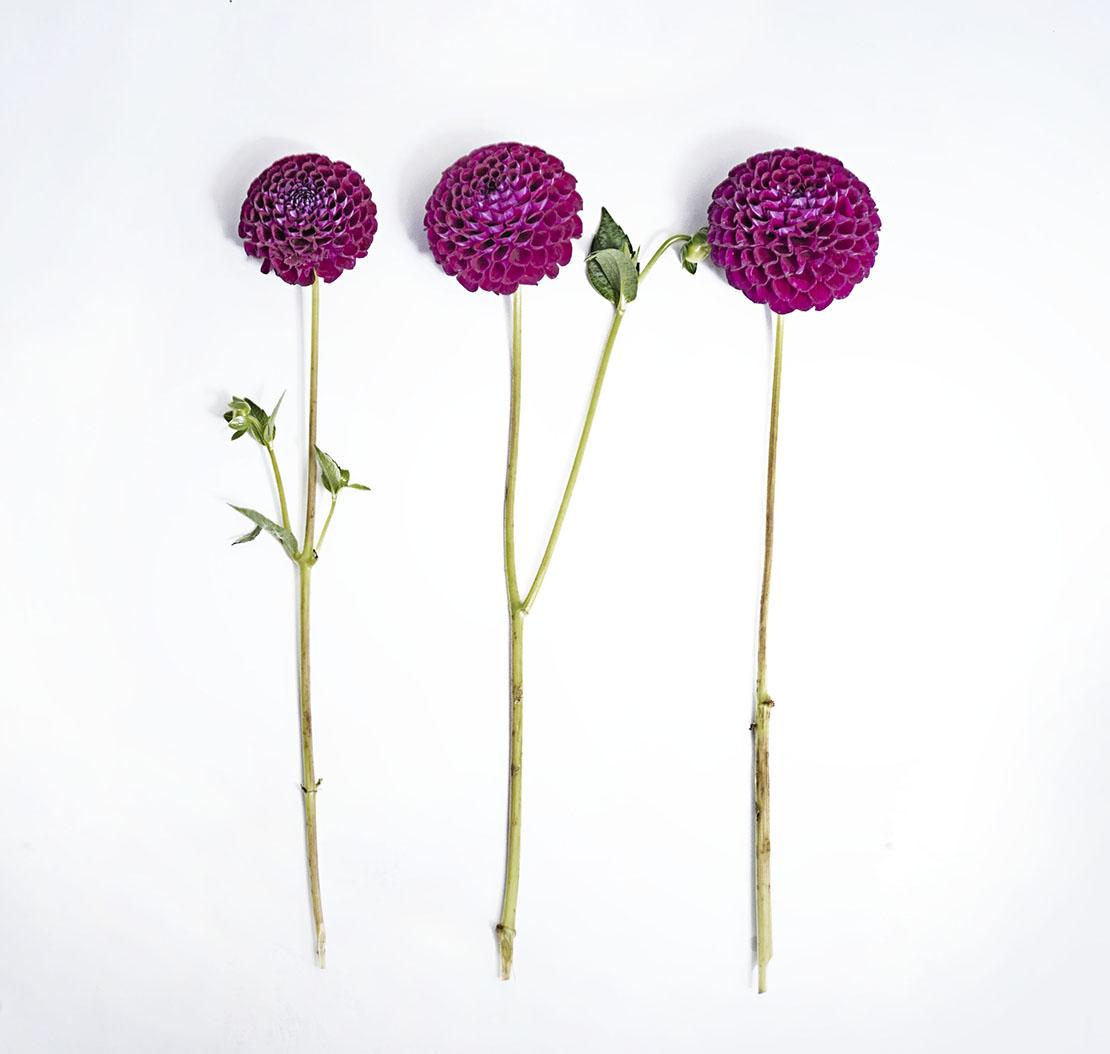 jesienne dekoracje z kwiatów